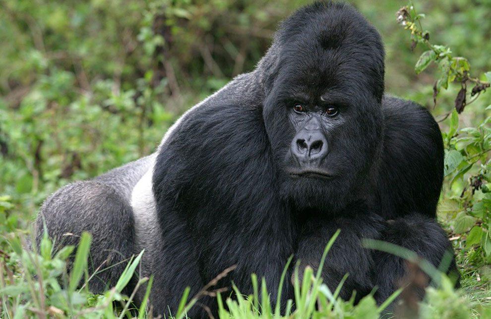 Uganda - Trekking para ver Gorilas en el Lago Bunyonyi